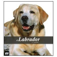 Il labrador