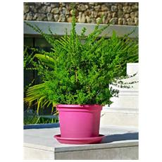 Vasi da giardino: prezzi e offerte in ePRICE
