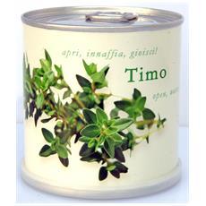 Timo Fiori In Lattina Macflowers Made In Germany Cm 7,5x8 H