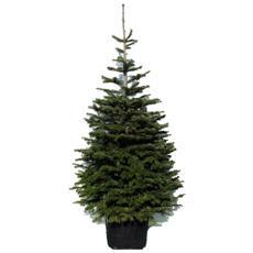 Albero Di Natale 400 Cm.Alberi Di Natale Prezzi E Offerte Eprice