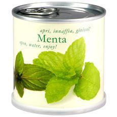 Menta Fiori In Lattina Macflowers Made In Germany Cm 7 5x8 H