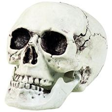 74362 - Teschio Maxilla Con Mandibola Apribile 17x15 Cm, Bianco