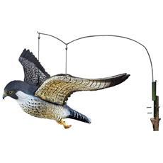 Grande Falco Pellegrino In Volo