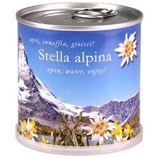 Stella Alpina Fiori In Lattina Macflowers Made In Germany Cm 7 5x8 H