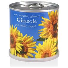 Girasole Fiori In Lattina Macflowers Made In Germany Cm 7 5x8 H