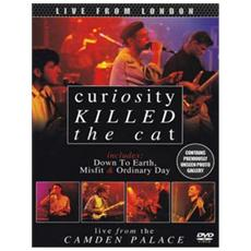 Dvd Curiosity Killed The Cat - Live From