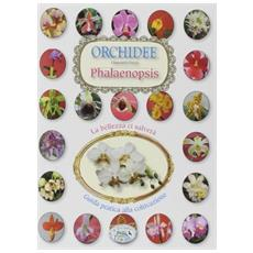 Orchidee phalenipsis