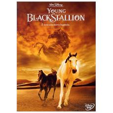 Dvd Young Black Stallion