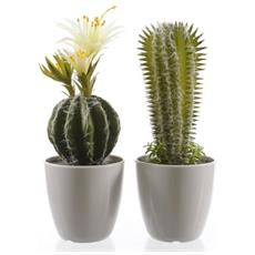Cactus Cm32 Verdi In Vaso Ass