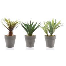 Cactus Cm. 20 In Vaso 3ass.