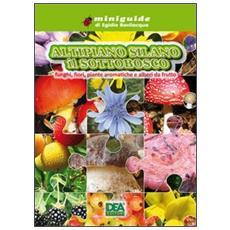 Altipiano silano. Il sottobosco funghi, fiori, piante aromatiche e alberi da frutto