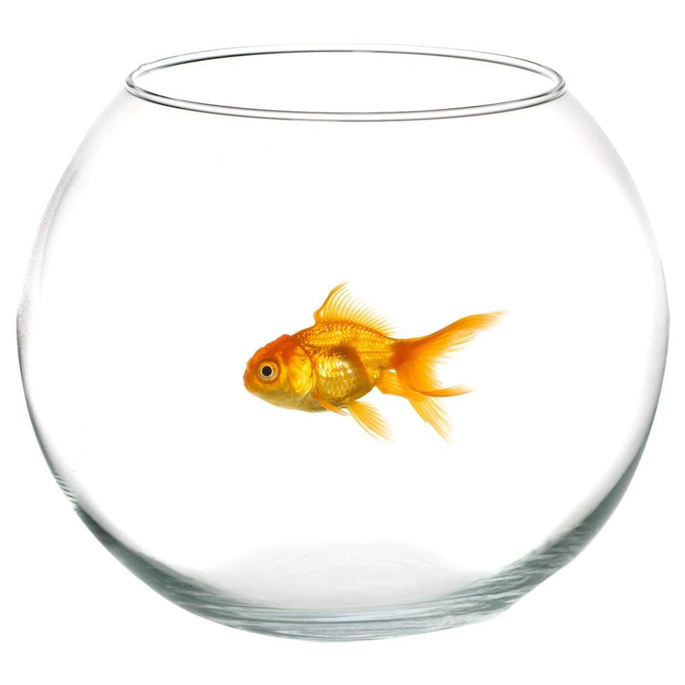 TAKESTOP Ampolla Boccia In Vetro Trasparente 30 Cm Acquario Per Pesci Pesce  Rosso Centrotavola Vaschetta Vaso Porta Fiore Fiori Candela