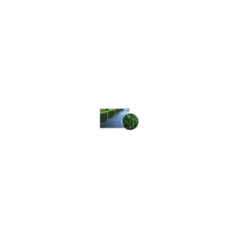Siepe Edera H 100 M 20 Ilcampo 06231